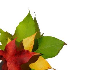 vert, jaune rouge 03