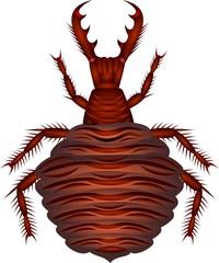 myrmeleon larva