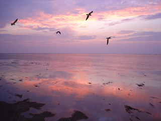 birds over water at sunset