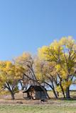 autumn shelter poster