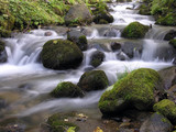 Fototapety the stream
