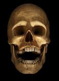 skull on black poster