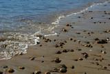 pebbles waiting at the shore poster