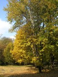 golden polish autumn poster