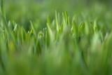 lawn poster
