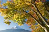 mount fuji in fall vi poster