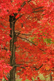 contrasts of autumn poster