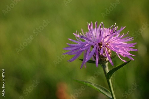 violet flower on the field