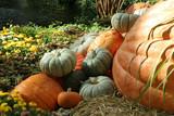 pumpkin display poster