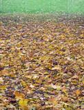 autumnal gradient (2) poster