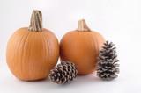 harvest pumpkin poster