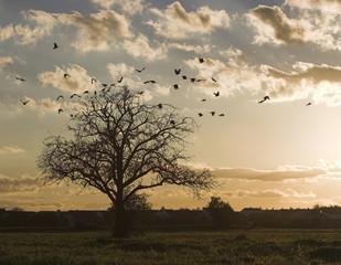 abflug der krähen
