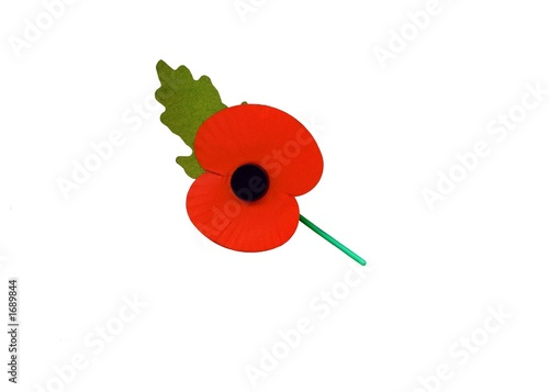 rememberance days' poppy.symbol of sorrow