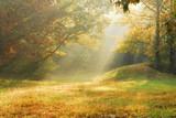 Fototapety foggy rural scene