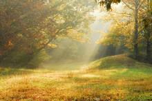 "Постер, картина, фотообои ""foggy rural scene"""