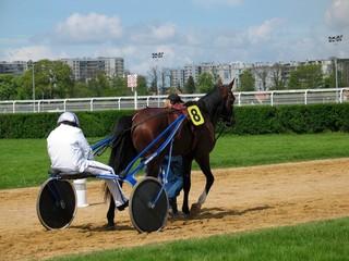 cheval de course à enghien