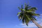 single palm tree poster