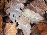 frozen leaves poster