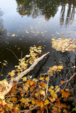 autumn leafs on the water level poster