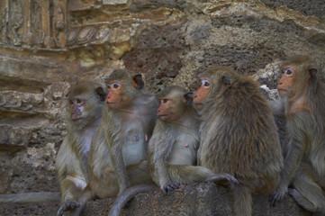 monkey-14