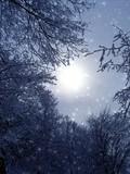 winter evening fantasy