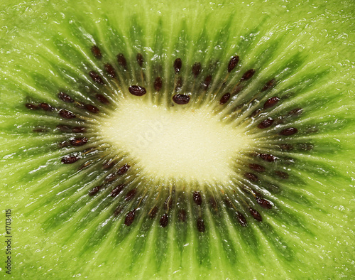 Leinwandbild Motiv kiwi