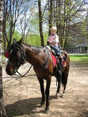 little horse rider
