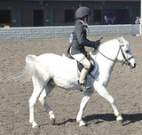 white welsh pony & rider