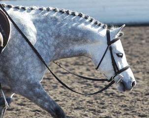 pony42