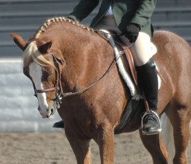 pony46