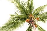 palm coconuts poster