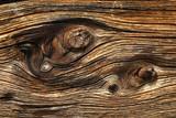 Fototapeta belka - powierzchnia - Drewno