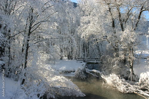 winter im auwald