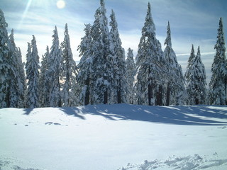 snow on trees at crater lake
