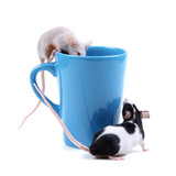 little mice poster