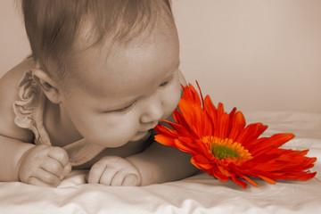 baby sepia flower