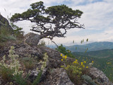 tree on mount poster