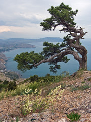 sea and tree