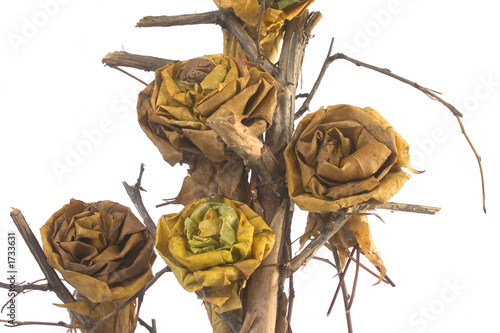 dried leaves branch