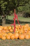 pumpkins and red pump poster