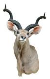 kudu mount poster