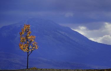 autumn tree and mountains