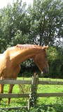 horse in field/farm poster