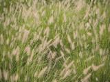 wispy weeds poster