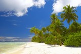 forest on the beach in indian ocean poster