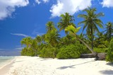 nice tropical forest on the beach in indian ocean poster