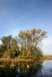 fall colors - autumn countryside - pond poster