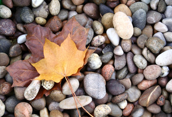 pebbles and leafs.
