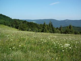 prairie de printemps en montagne