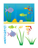 aquarium with fishes, snails and plant, severy element is isolat poster